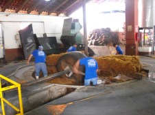 Sifting the agave!