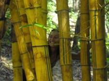 Peek-a-boo bamboo!