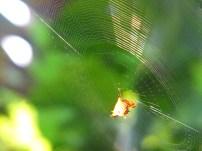 Spider photo shoot!