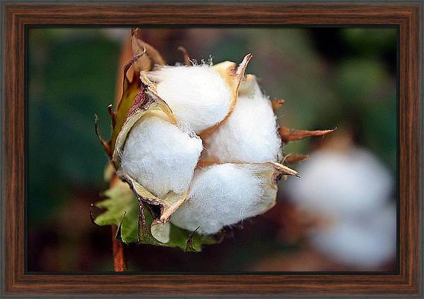 Cotton Boll Wall Art