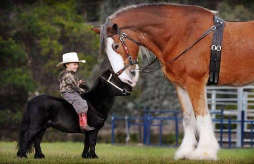 Mali kauboj...
