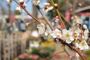 梅の花に春の訪れを感じた【週刊LR】2016年2月28日