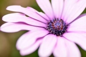 マクロの魅力を伝えたい!木場公園で春の生き物を撮影してきました!
