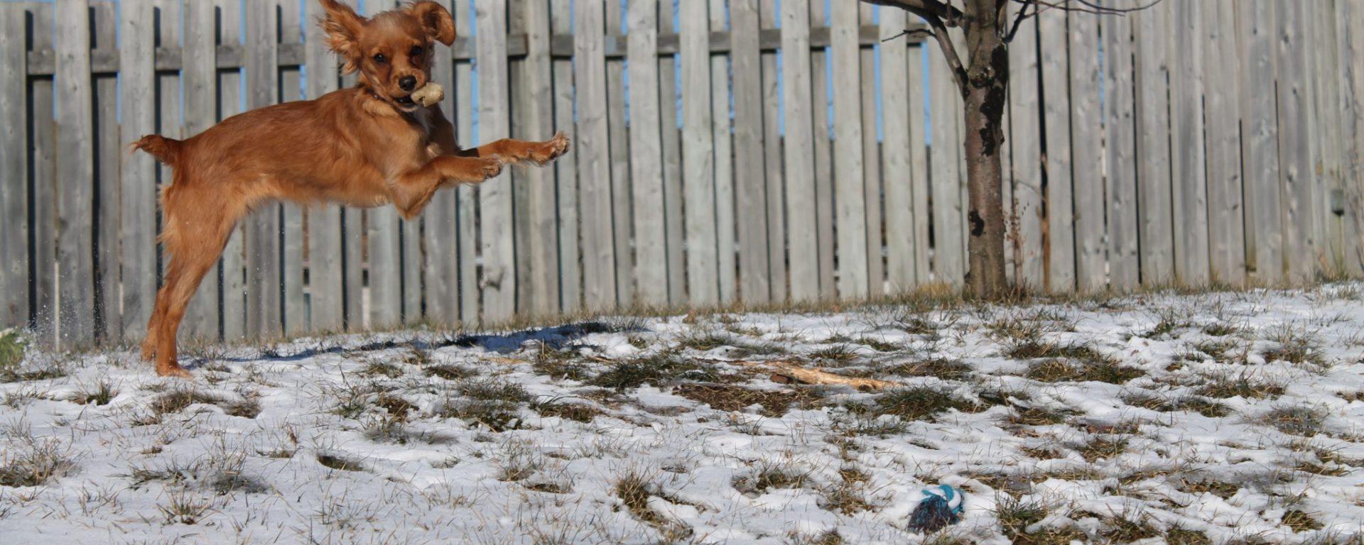 Chloe-The-ADHD-Dog