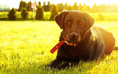 Dog Friendly Motorhome Hire