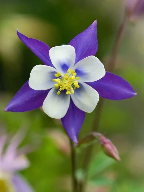 5 Favorite Colorado Native Perennials - Lifescape Colorado