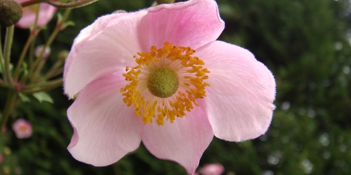 南ドイツの花
