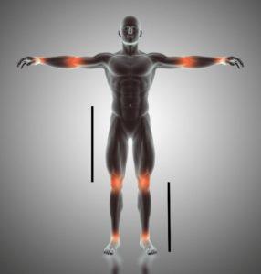 The golden ratio in human body