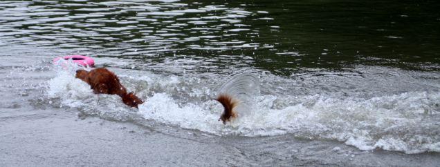 Belle splash down