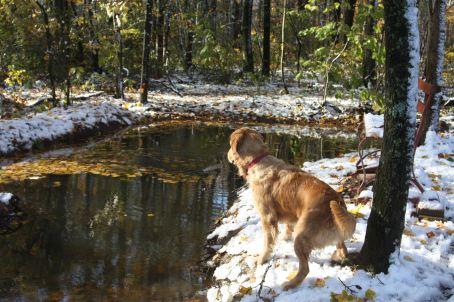 Dagan at swimming holes edge