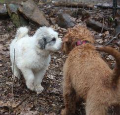 29 Feb 12 Ringo saying hello to Flora