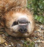 Ozzy zonked