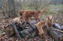 27 Nov 12 Family log climbing fun Jorgi Penny Jeremiah Bailey