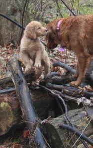27 Nov 12 Jorgi and Penny log climbing
