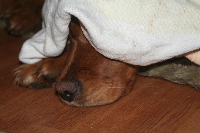 26 Feb 13 Penny do not disturb