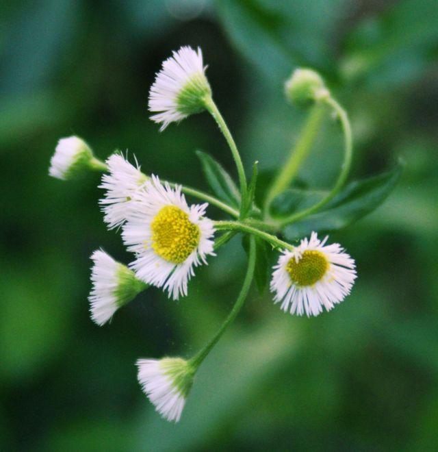 16 May 15  wild flower 2
