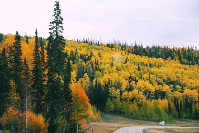 sept-2016-aspens-of-cedar-mountain
