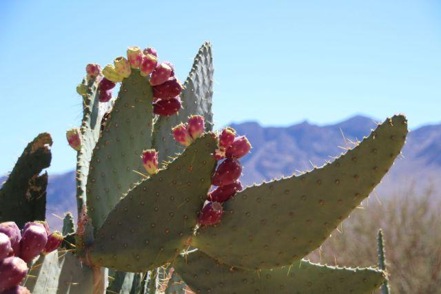 sept-2016-cactus-10