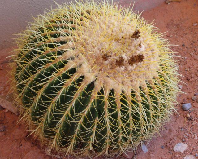 sept-2016-cactus-9