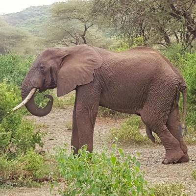 Safari Day 1: Lake Manyara National Park
