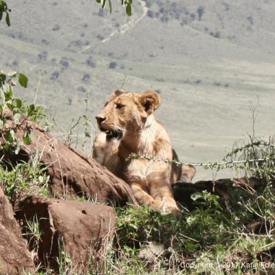 Safari Day 2: Ngorongoro Crater