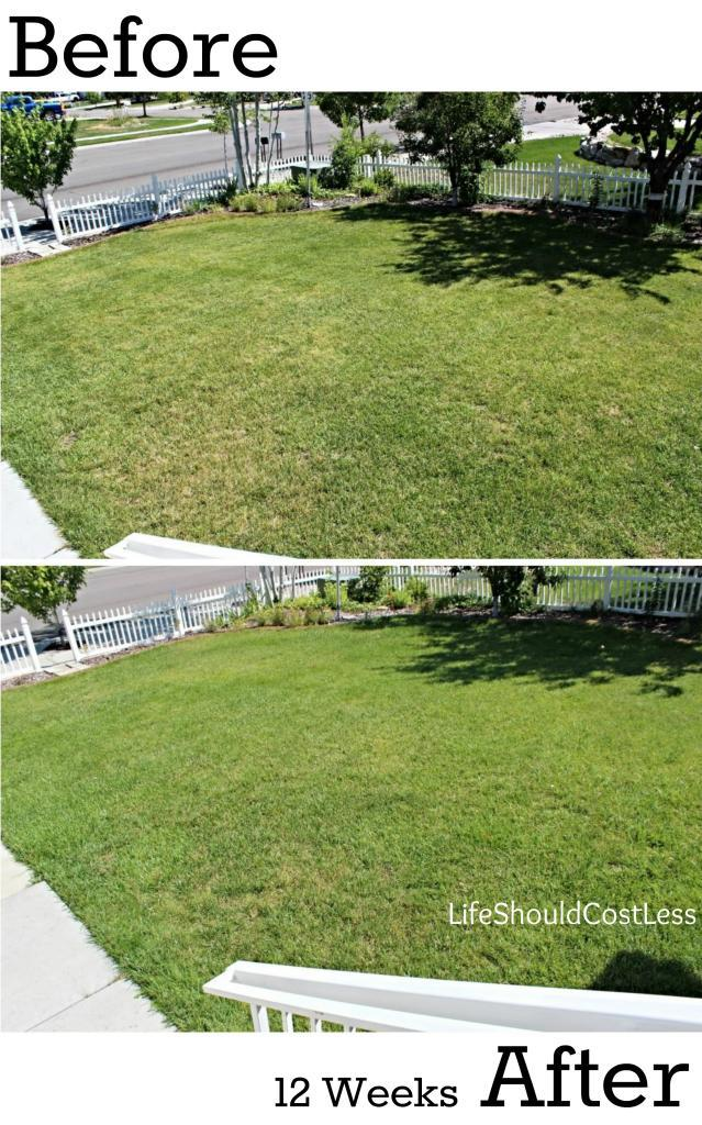Should Spring Your You Lawn Rake