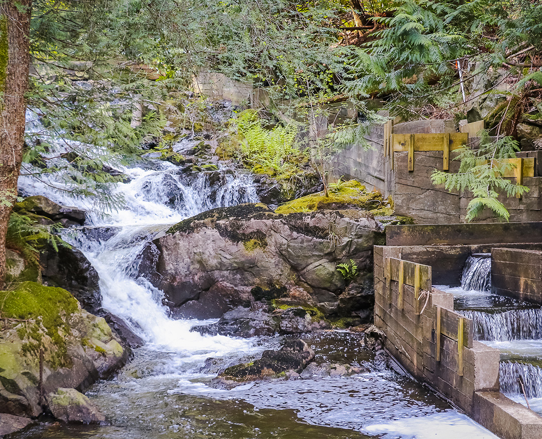 Explore Bowen Island hiking trails. Take a walk through a rainforest filled with moss and dense ferns, with lake views on a trail on Bowen Island near Vancouver, BC. Photo Credit: Wendy Nordvik-Carr
