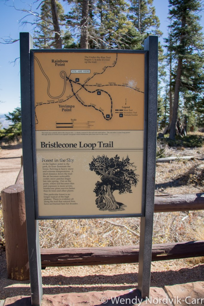 Travel to Bryce Canyon to discover The largest hoodoo collection in the world. The stop at at Mile 18 provides some of the longest continuous views available in North America. This viewpoint provides access to the Bristlecone Loop trail. Photo Credit: Wendy Nordvik-Carr