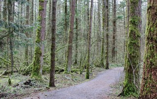 Come walk in the forest of Campbell Valley Regional Park located in Langley. The trail winds through the scenic, serene, mossy woods.