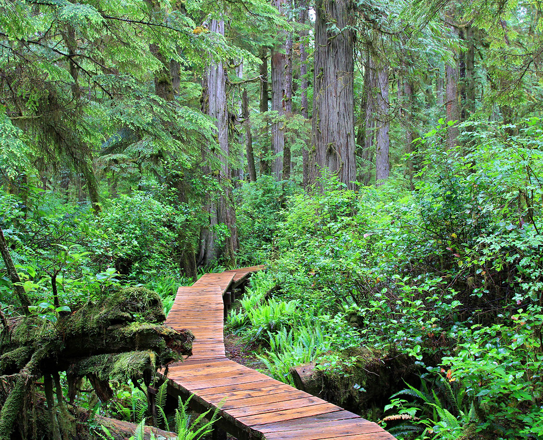 Pacific Rim National Park - Top things to do