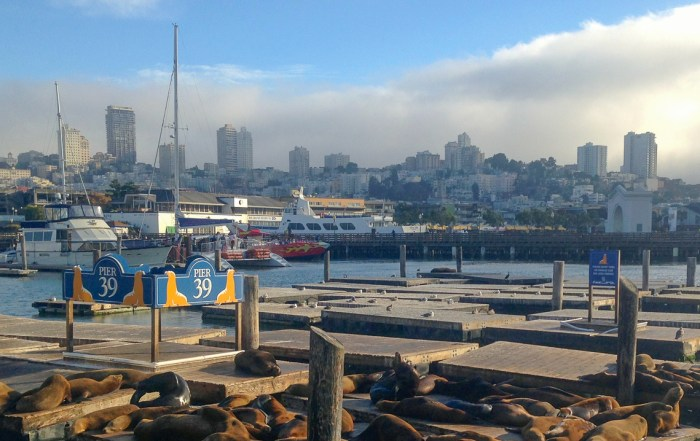 Discover Pier 39 in San Francisco. See Alcatraz and the famous sea lions. Explore top things to do while in port. Photo Credit: Wendy Nordvik-Carr