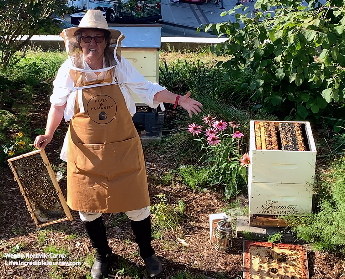 Rooftop beekeeping in Vancouver - Julia Common, chief beekeeper tends to thousands of bees on the rooftop of Fairmont Waterfront Hotel. Photo Credit: Wendy Nordvik-Carr©
