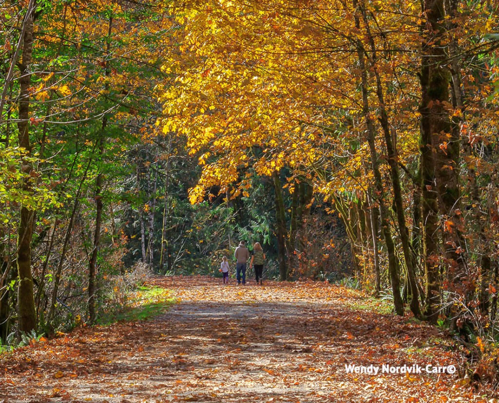 Autumn colours along the Orthello Tunnels trail.