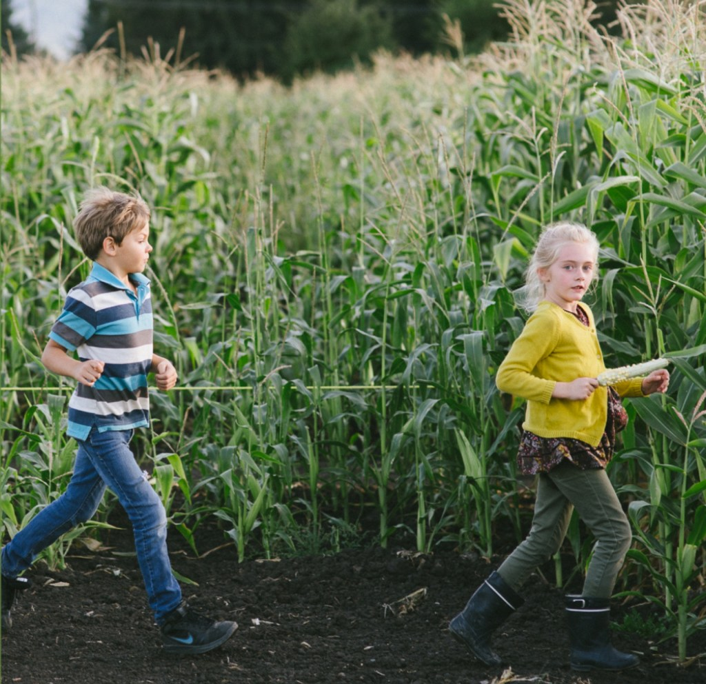 Chilliwack Pumpkin Patch and Corn Maze