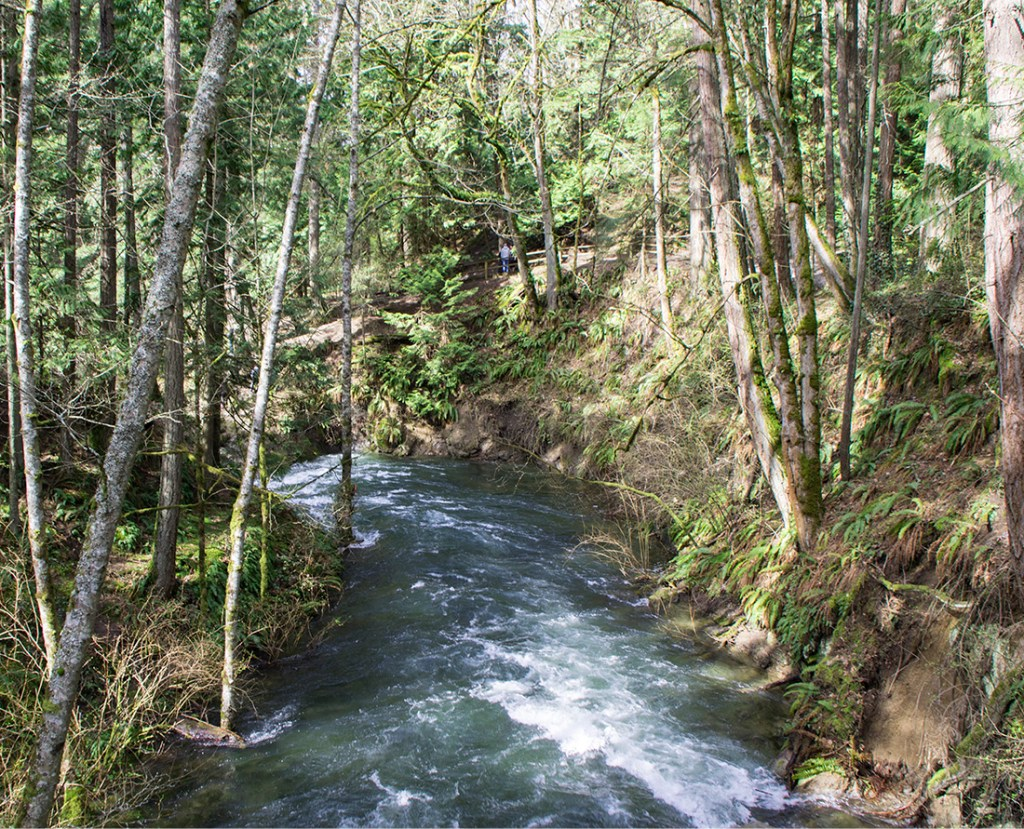 Whatcom River in Whatcom Falls Park: Photo Credit: Wendy Nordvik-Carr©