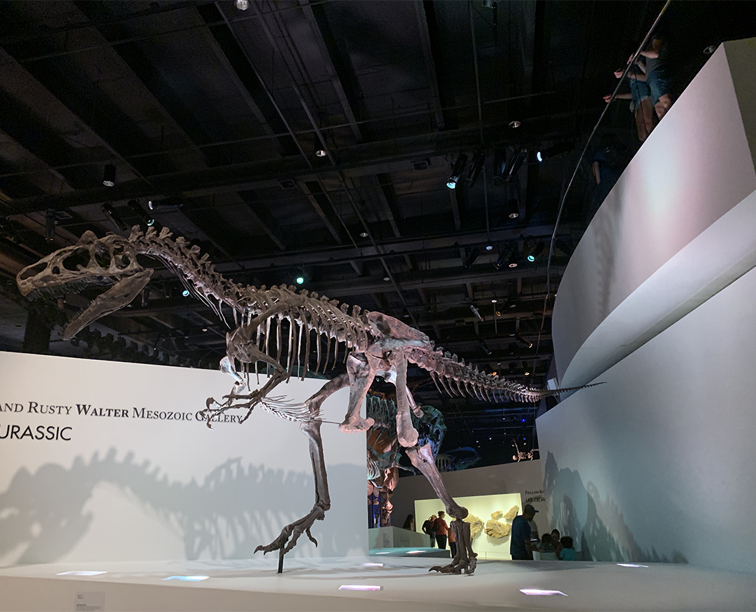 Deinonychus of Jurassic Park fame is on display at the massive dinosaur exhibit in Houston, Texas at the Museum of Natural Science. Photo Credit: Wendy Nordvik-Carr©