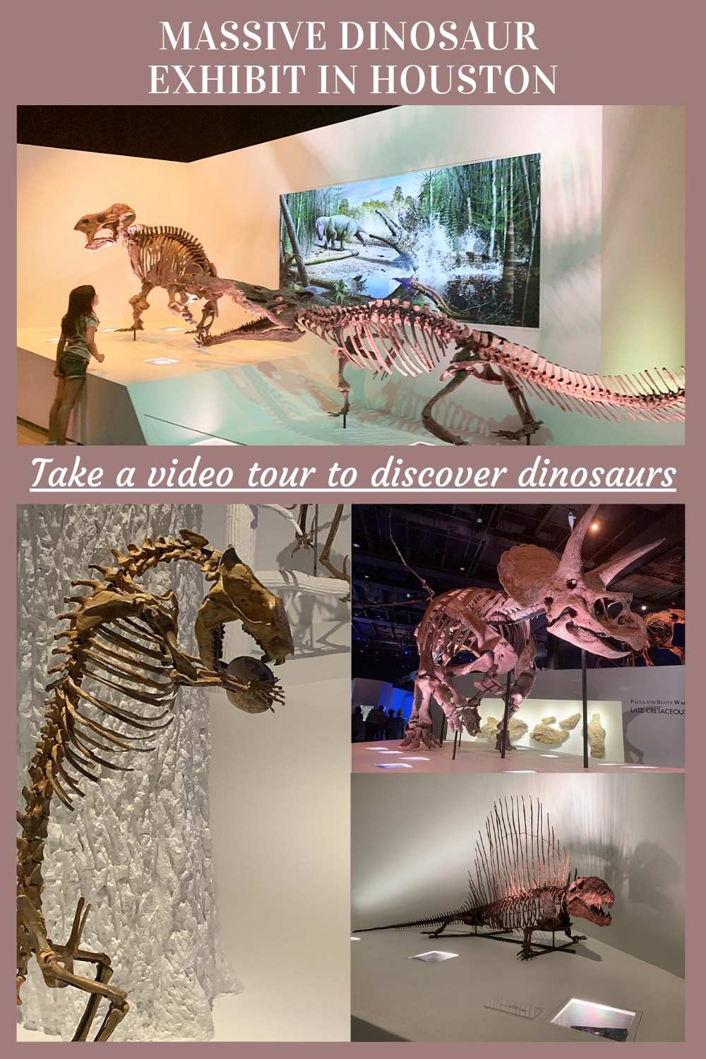Video: Explore the massive dinosaur exhibit in Houston