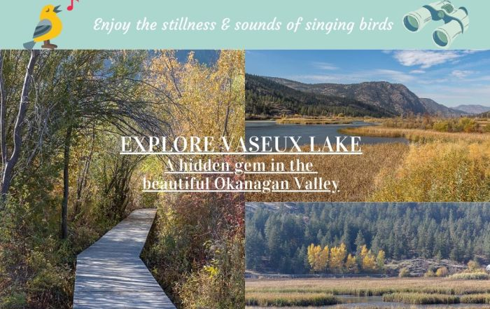 Enjoy a peaceful hike at Vaseux Lake, a critical habitat for many at risk species. It provides excellent bird watching & wildlife viewing in the Okanagan Valley.
