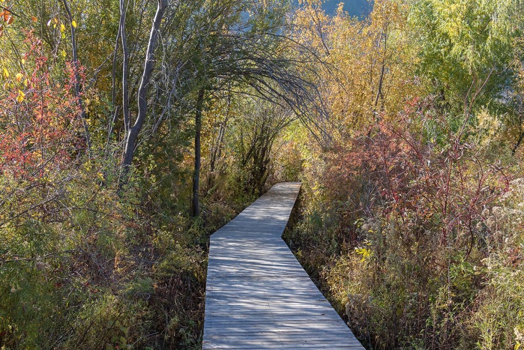 Enjoy the breathtaking scenery at the Vaseux Lake Bird Sanctuary. Follow the boardwalk and hiking trail through the the grasslands to the bird observation tower. Photo Credit: Wendy Nordvik-Carr©