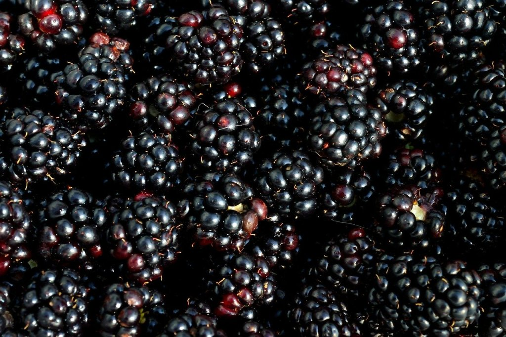 Blackberry season in Metro Vancouver.