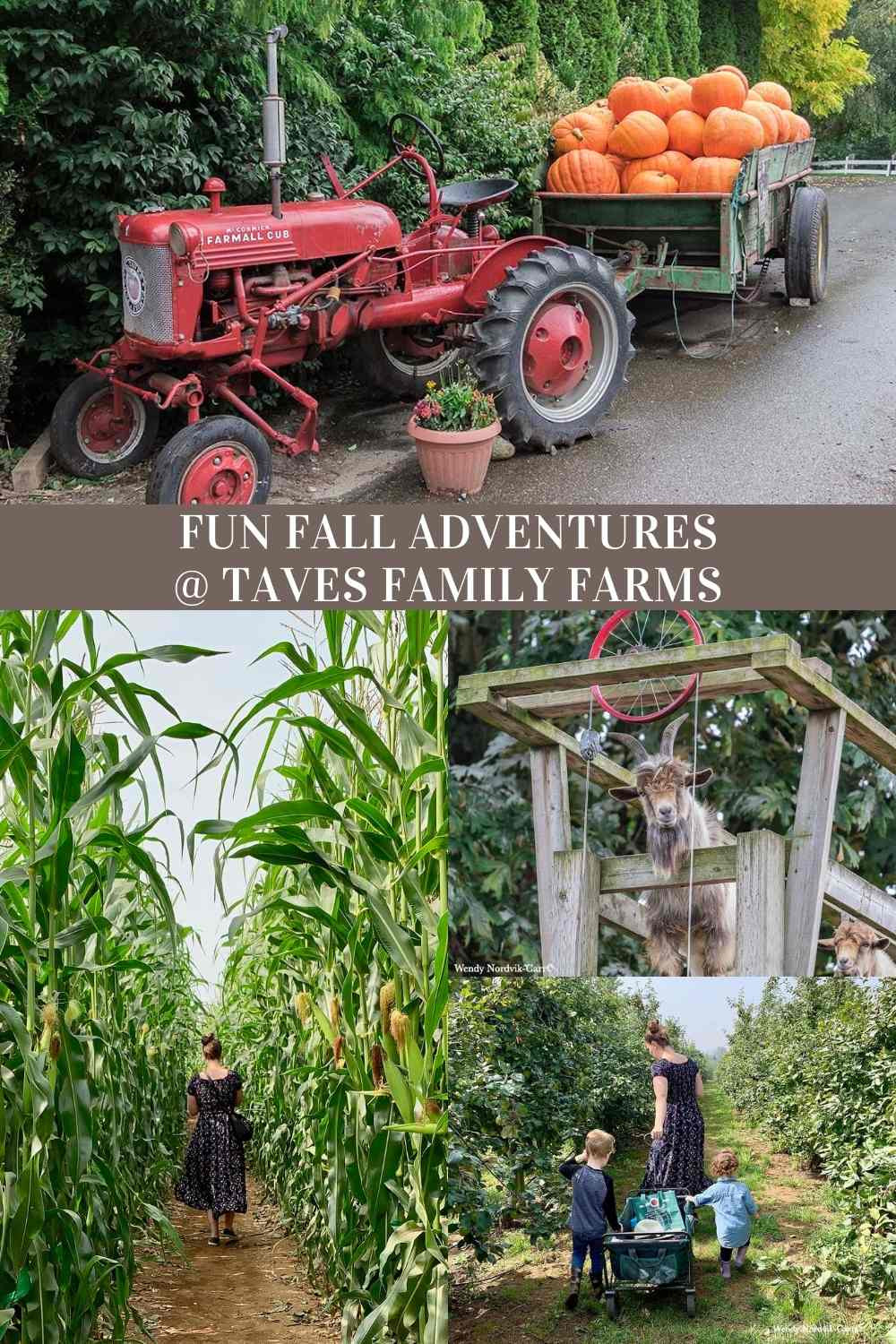 Adventures at Taves Family Farms Applebarn Pumpkin Patch and Corn Maze with video