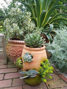 Succulents in a strawberry pot