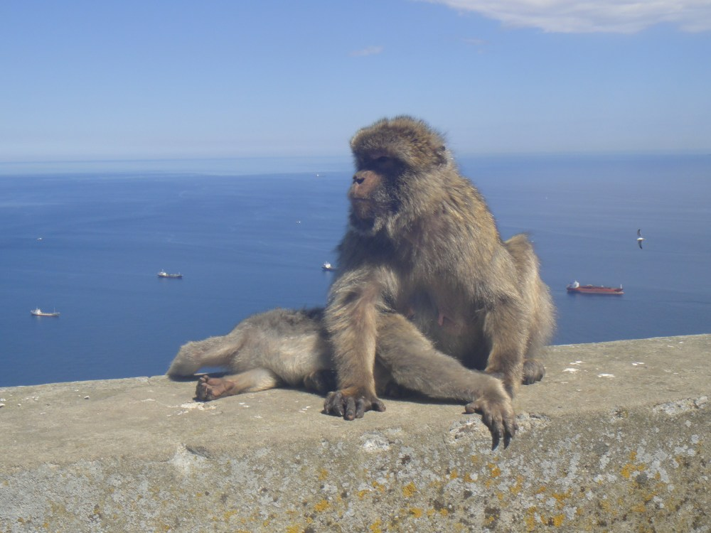 Testing My Limits: Day Trip to Gibraltar (6/6)