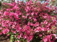 Spring has sprung big time!