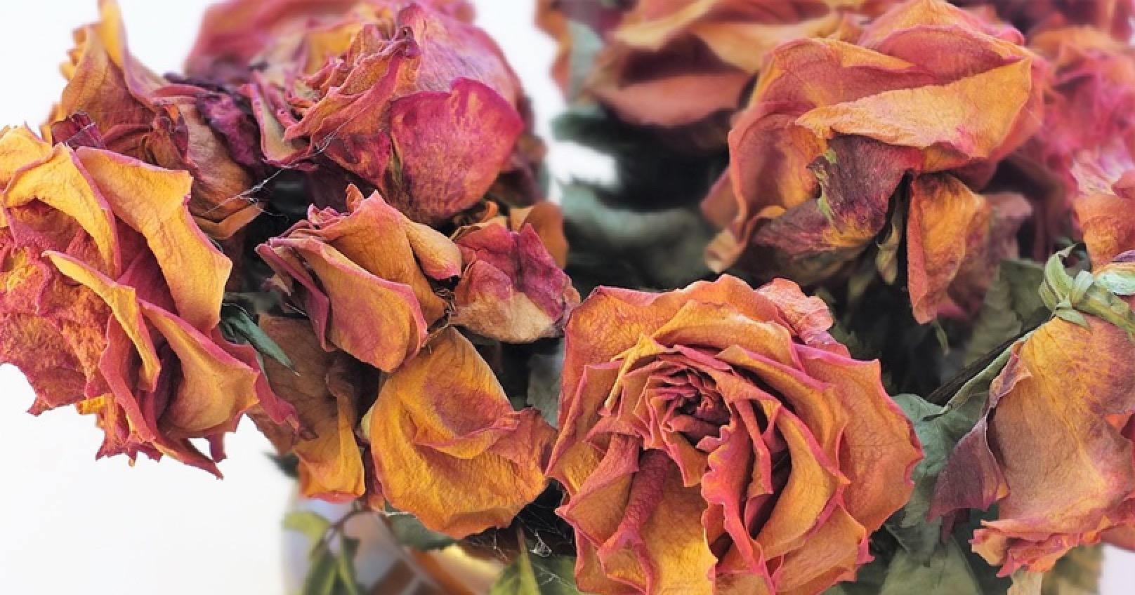 Mental Health Roses