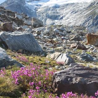 Fleurs et glacier!