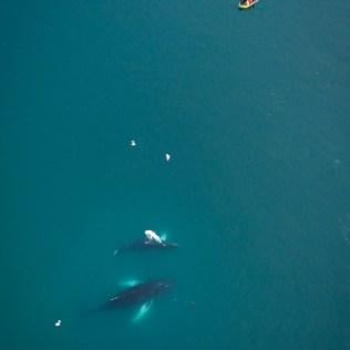 Observation des baleines de près!