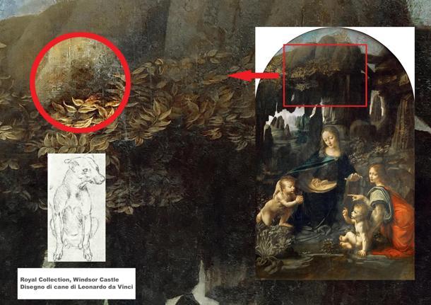 Leonardo da Vinci scoperta cane