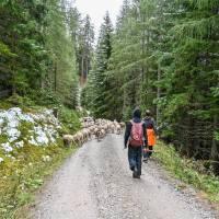 GAP and EPLR Finanzierungsmöglichkeiten für den Herdenschutz