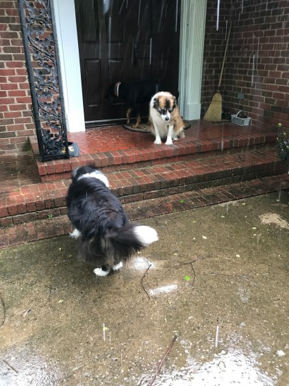 You two enjoy the rain. I'm going back inside.